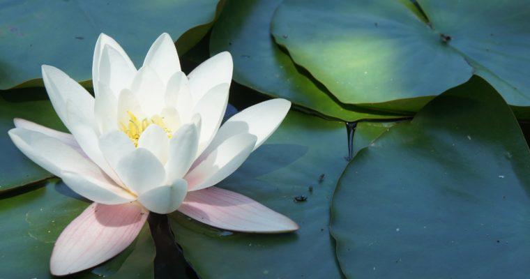 Über Spiritualität und wie ich dazu gekommen bin